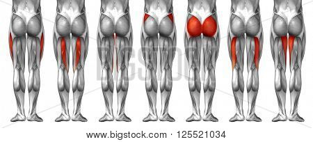 Concept or conceptual 3D human upper leg anatomy or anatomical and muscle set or collection isolated on white background stock photo