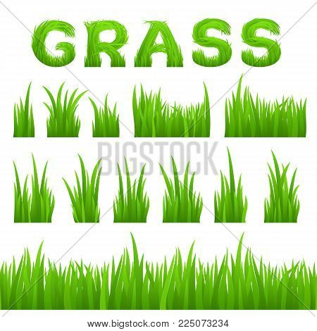 Grass texture design elements set isolated on white background. Collection of early spring green grass horizontal seamless grass row, grass bushes, grass inscription. Vector illustration