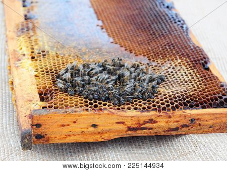 The extinction of honey bees. Beekeepers have been noticing their honeybee populations have been dying off at increasingly rapid rates. stock photo