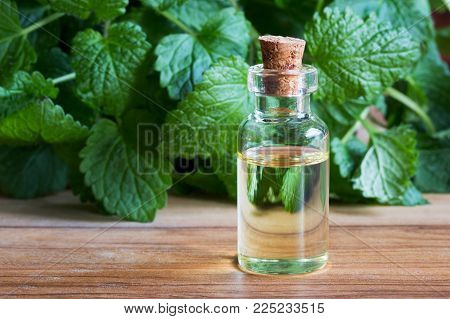 A transparent bottle of melissa (lemon balm) essential oil with fresh melissa twigs in the background stock photo