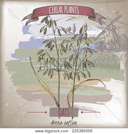 Common oats aka Avena sativa color sketch with field landscape. Cereal plants collection. Great for bakery, agriculture, farming design. stock photo