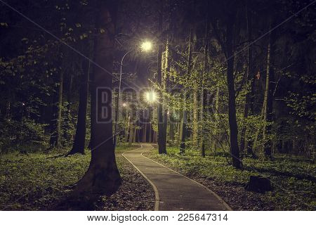 Trees In Woodland Park With Lights At Dark Night. Landscape Of Night Spring Green Park In City. Path