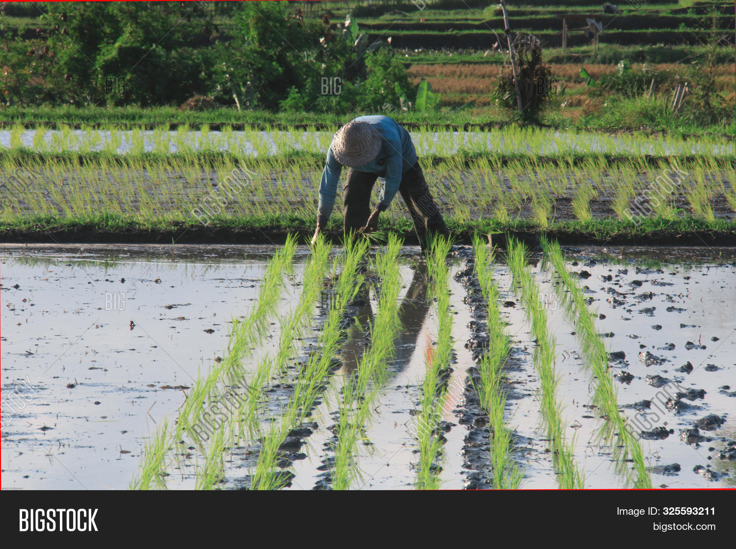 agribusiness,agricultural,agriculture,agronomy,asia,asian,country,dramatic,elderly,farm,farmer,farming,father,field,food,garden,green,grunge,hands,harvest,hill,india,inovation,landscape,macro,man,mountain,myanmar,nature,old,organic,paddy,panorama,plant,potrait,reflection,rice,terrace,terracing,thai,vietnam,village,water,wheat,work,worker,yellow