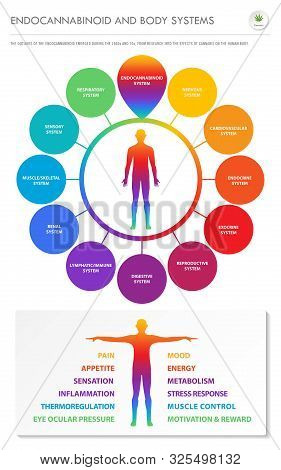 Endocannabinoid and Body Systems - Endocannabinoid vertical infographic illustration about cannabis as herbal alternative medicine and chemical therapy, healthcare and medical science vector. stock photo