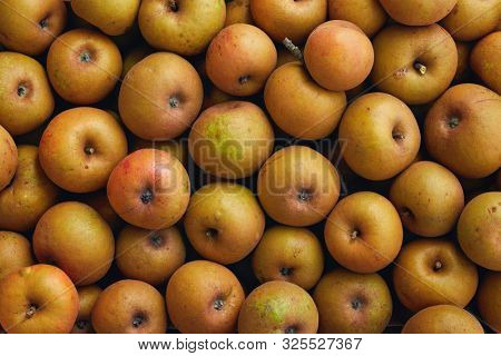 Heirloom reinette apples. An apple of rustic appearance that is very authentic and rich in flavors.  stock photo