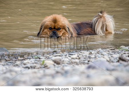Pets are rescued from the heat, the dog is cooled in a mountain river stock photo