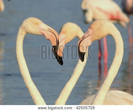 Close up of several white flamingo heads stock photo