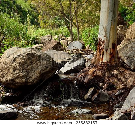 Ravine with large rocks, eucalyptus root and natural water, Valsequillo, Canary islands stock photo