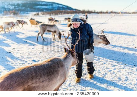 Teenage boy surrounded by many reindeer on sunny winter day in Northern Norway stock photo
