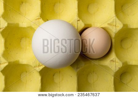 top view giant size goose egg next to a chicken egg on package concept of size comparison stock photo