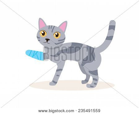 Cat with a broken leg Vector. Cartoon. Isolated art on white background. Flat stock photo