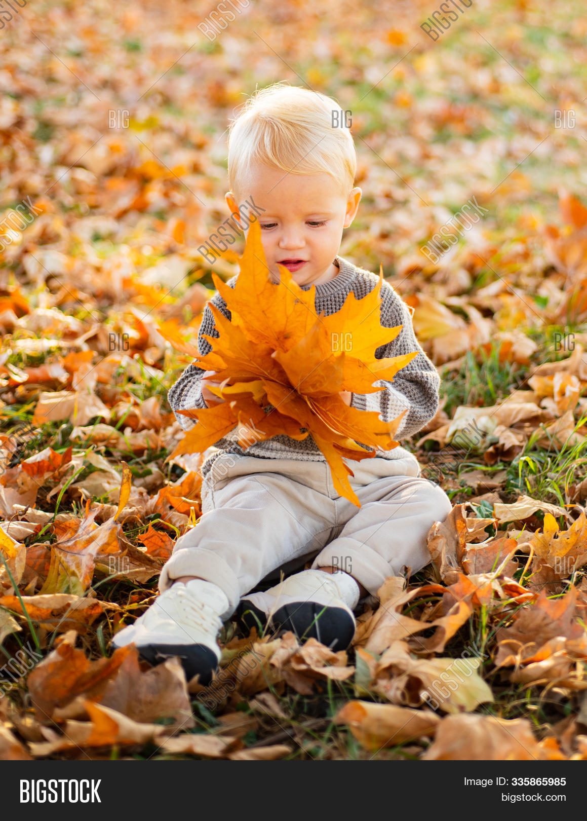 autumn,autumnal,baby,beatiful,child,childhood,children,colorful,cute,day,face,fall,falling,garden,happiness,hold,holding,holiday,kid,leaf,leaves,maple,nature,orange,outdoor,people,play,playing,portrait,season,sunny,yellow