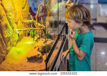 Little kid boy admire big turtles in terrarium through the glass stock photo