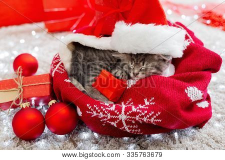 Christmas Presents Concept. Christmas Cat Wearing Santa Claus Hat Holding Gift Box Sleeping On Plaid