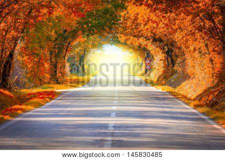 Autumn Fall Road landscape - Real trees tunnel and magic light,  beautiful autumnal colors