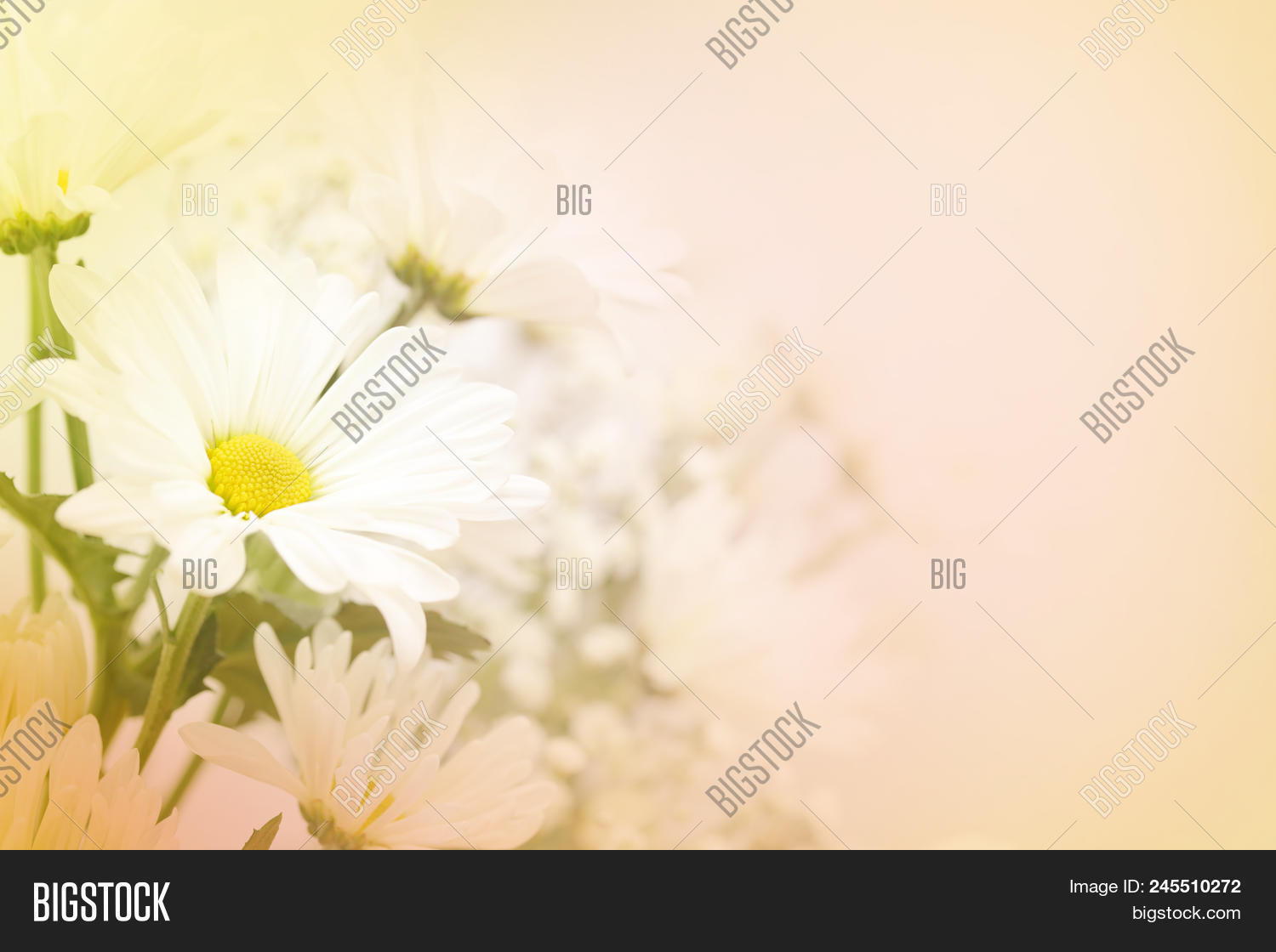 A beautiful soft white daisy flower on a blurred background in pink, yellow and green.  Large text area on the right side.