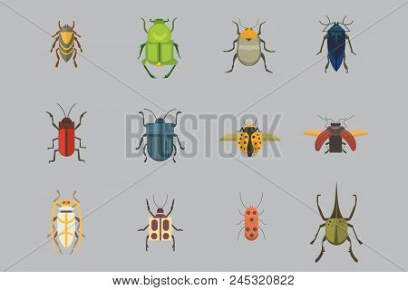 Set of insects flat style vector design icons. Collection of nature beetle and zoology cartoon illustration isolated stock photo