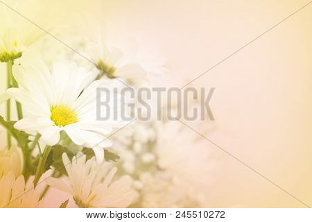 A beautiful soft white daisy flower on a blurred background in pink, yellow and green.  Large text area on the right side. stock photo