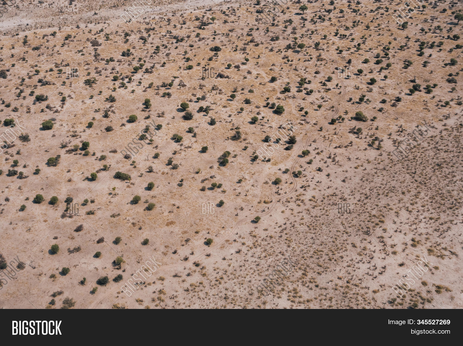 Arid Savanna Aerial Background with Bushes and Trees on an Arid Plain, an Abstract Drone Shot with Copy Space