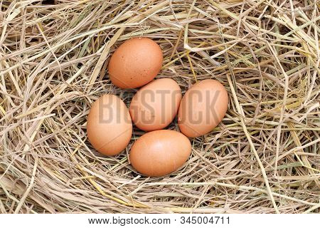 many brown eggs on rice straw.The benefits of egg are rich in vitamins and minerals of various types, such as B vitamins, vitamin C, vitamin D, vitamin E, vitamin K. stock photo