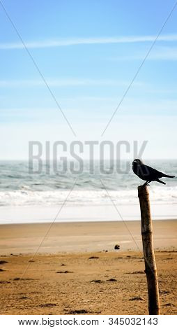 A crow bird sitting on a bamboo palisade wooden boundary post structure. Distant Empty Sea beach Island background. Animal wildlife Theme. Travel Tourism backgrounds. Copy space room for text on left. stock photo