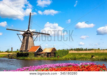 Colorful spring landscape in Netherlands, Europe. Famous windmills in Kinderdijk village with a tulips flowers flowerbed in Holland. Famous tourist attraction in Holland stock photo