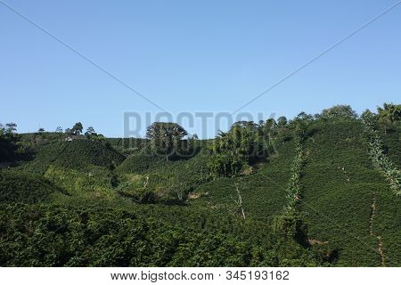 Fields and coffee plantations in the Colombian Andes. Montenegro, which is nestled between mountains of the Cordillera Central, in Colombia. Zone of high quality coffee. stock photo