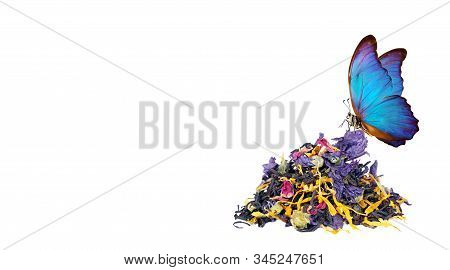 heap of tea leaves and flower petals isolated on a white. blended tea close up. beautiful blue morpho butterfly on a heap of blended tea. drink concept. top view stock photo