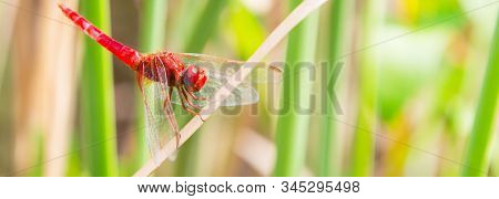 The Red dragonfly looking at the camera and green background stock photo