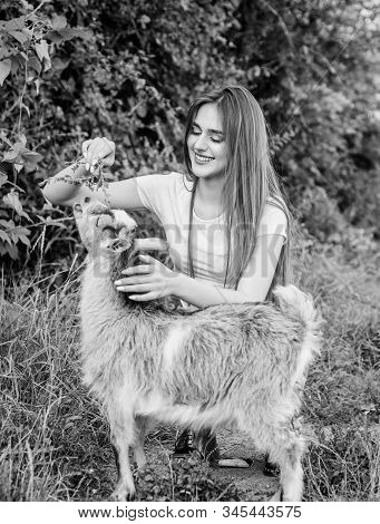 Feeding animal. Animals law. Woman and small goat green grass. Farm and farming concept. Village animals. Protect animals. Girl play cute goat. Veterinarian occupation. Eco farm. Love and care stock photo