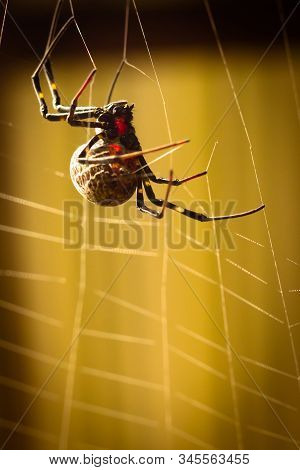 A black and brown colour spider is photographed close up, macro picture,Natural background,spider and spider web. Spiders are creating spider webs. stock photo