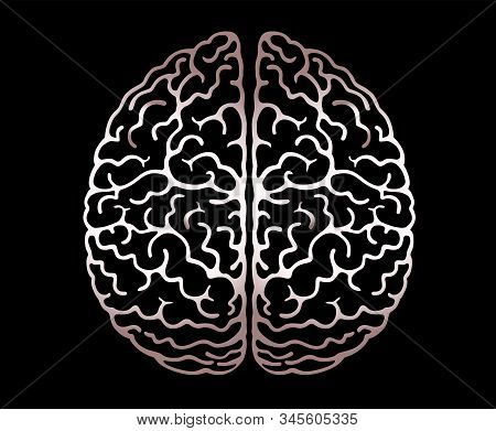 Vector Outline Illustration Of Human Brain On Black Background. Cerebral Hemispheres, 