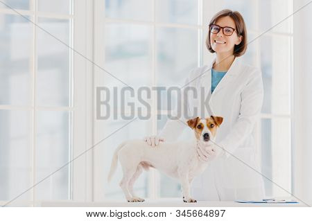 Animal care and health. Indoor shot of woman vet in white gown and medical gloves, stands near examination table, examines dog, pets puppy, pose in modern veterinary clinic against big window. stock photo
