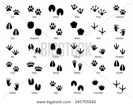 Animal footprints. Walking track animals paw with name, pets tracks, bird and wild animals trail, wildlife safari feet silhouette isolated vector foot prints stock photo