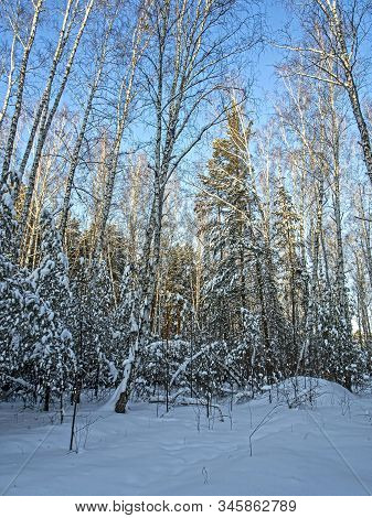 beautiful winter mixed forest in the southern Urals stock photo