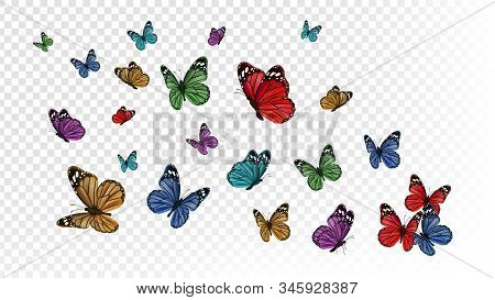 Flying butterflies. Colorful butterfly isolated on transparent background. Spring and summer insects vector illustration. Butterfly summer and spring insect, flying animal stock photo