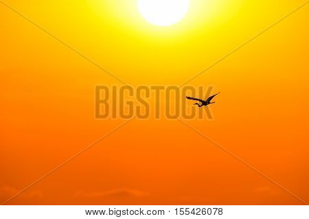 Bird silhouette flying is a single soul soaring among the orange golden sky on a jouney towards the unknown. stock photo