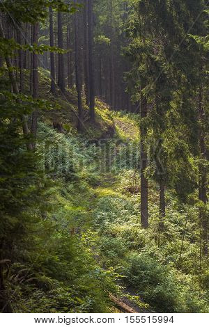 Fir Tree Forest. Inside Of The Romanian Woods. Bucovina Forest. Romania Mountain Forest. Beautiful F-Dishwasher Magnet Skin (size 24x24)