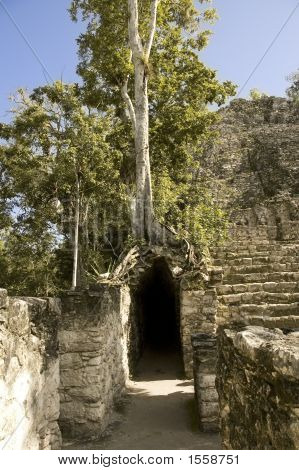 Surrounding by the jungle trees are still growing over the Maya Coba ruins Yucatan Peninsula Mexic stock photo