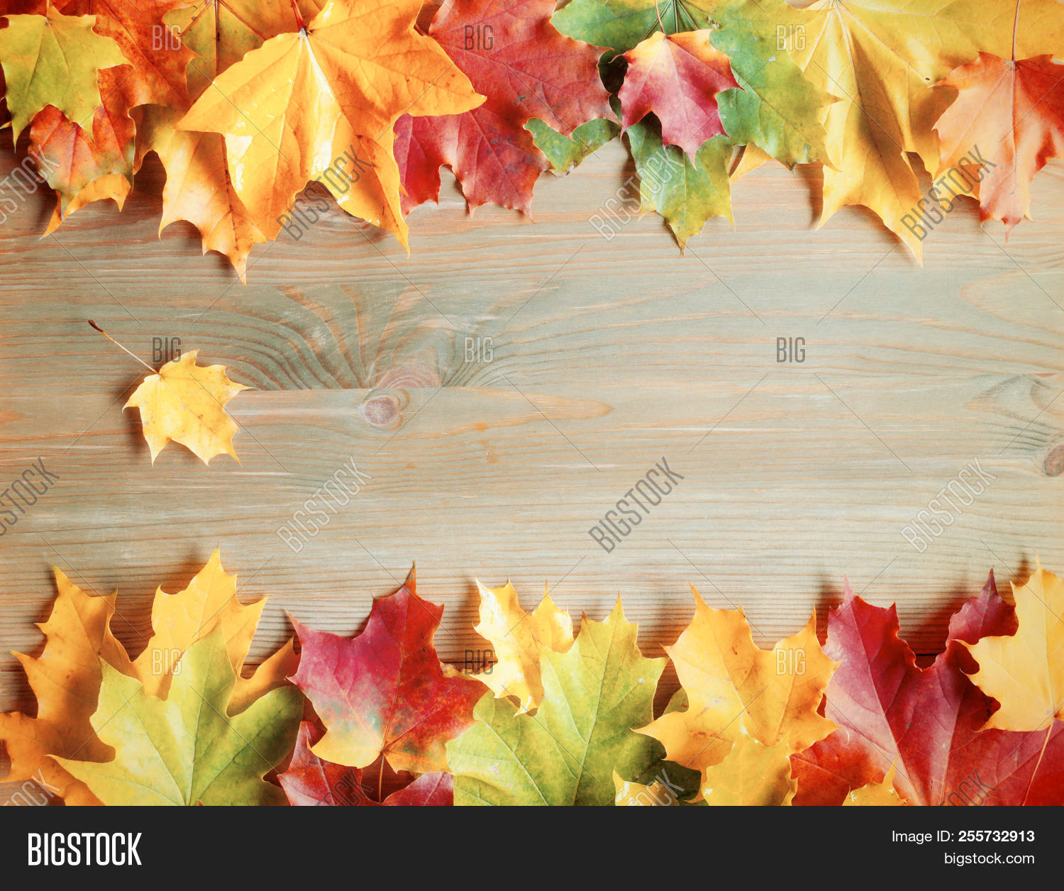 Fall Background. Maple Varicolored Fall Leaves On The Wooden Background With Free Space For Text. Co