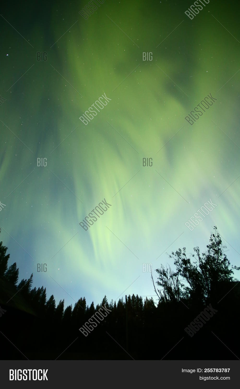 Above,Astronomy,Aurora,Back,Backlight,Black,Blue,Canopy,Celestial,Color,Colorful,Colour,Effect,Evening,Firmament,Focus,Forest,Green,Horizonal,Long,Luminary,Natural,Nature,Night,Norrbotten,North,Northern,Outdoors,Phenomenon,Pine,Silhouette,Stars,Stripe,Sweden,Tree,Vasterbotten,Wide,angle,body,borealis,exposure,lights,lit,sky,spectacle,top