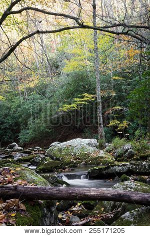 Creek with deadfall tree in the lower foreground with bare branches above, vertical aspect stock photo