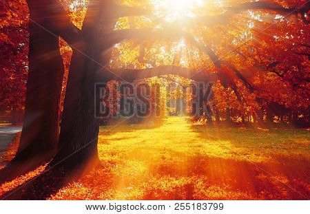 Autumn Trees In Sunny October Park Lit By Evening Sunshine. Colorful Autumn Landscape With Sunbeams