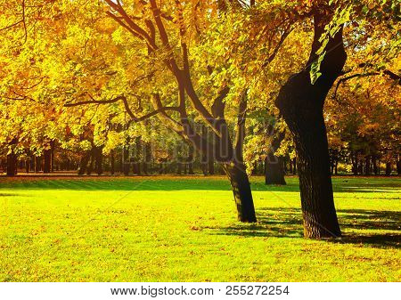 Autumn trees with yellowed autumn foliage in sunny autumn September park lit by sunshine. Colorful autumn landscape in vivid tones. Beautiful autumn trees in the sunny autumn weather