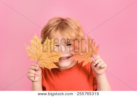 Autumn. Happy boy hides by maple leaf. Happy childhood. Autumn time. Little boy holds maple leaf. Yellow maple leaf. Kid playing with maple leaves. Isolated. stock photo