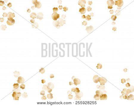Gold seashells vector, golden pearl bivalved mollusks. Sea scallop, bivalve pearl shell, marine mollusk isolated on white wild life nature background. Chic gold sea shell design. stock photo
