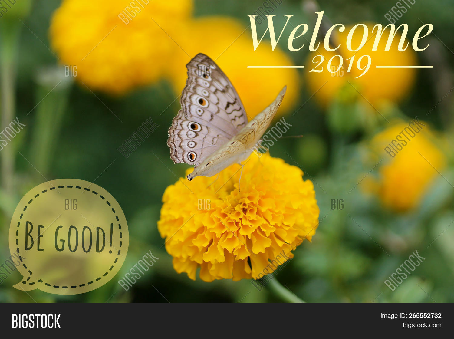 2018,2019,annual,background,banner,begood,blurry,bokeh,calendar,card,celebrate,celebration,christmas,concept,creative,date,december,design,end,eve,event,flower,fly,flyer,font,graphic,green,greeting,happy,hello,holiday,inspirational,invitation,land,marigold,merry,modern,nature,new,party,poster,season,start,style,symbol,text,welcome,xmas,year,yellow