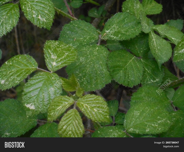 Fresh,blush,brambleberry,forest,green,leaves,pollen,spring,wild,yellow