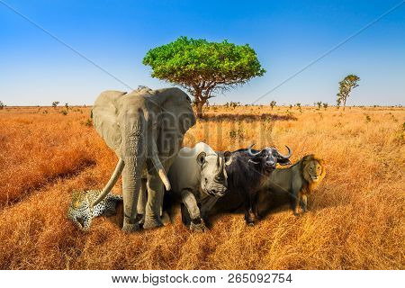 🔥 Africa Safari Scene With Wild Animals  African Big Five: Leopard