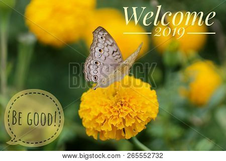 Welcome 2019 be good, be awesome, be inspired. A beautiful butterfly and marigold yellow flower with bokeh and blurry background. Welcoming the coming new year. Happy New Year 2019. stock photo